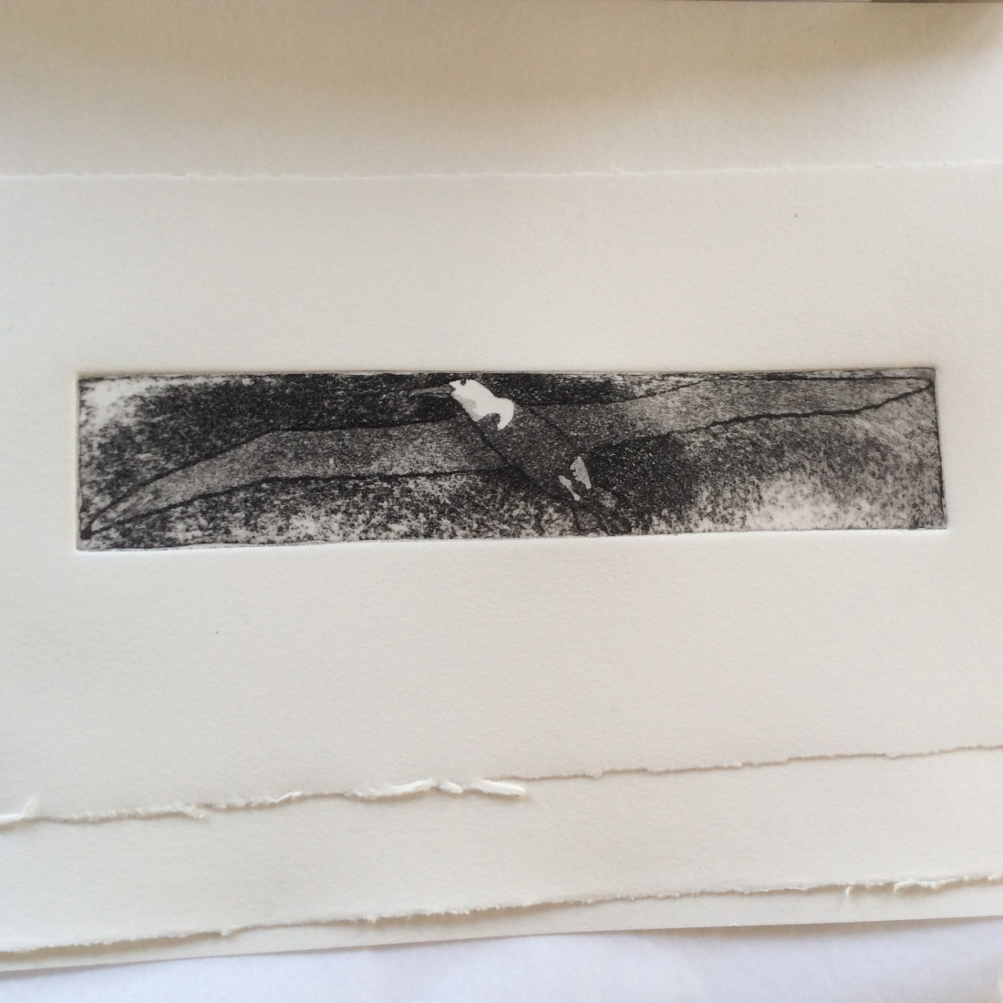 Albatross etching